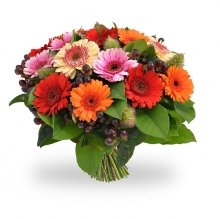 Mixed gerbera